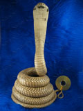 King Cobra Mount Taxidermy, 13.85 ft Snake