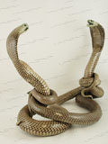 Free Shipping on Fighting Asian Spitting Cobra Snakes Taxidermy #36