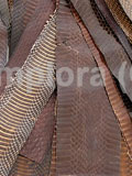 Free Shipping on Dark Brown Cobra Snake Skin Scraps