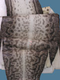 Free Shipping on Implora Natural Karung Snakeskin Hide Belly.